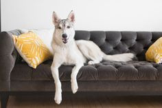 If your pet has couch privileges (or thinks he does), your furniture can start to smell like the dog park. Sprinkle baking soda on your cushions to freshen them, let it sit for 15 minutes, and vacuum it up. We also like Febreze Pet Odor Eliminator to quickly keep upholstery smelling nice in between deeper cleanings.