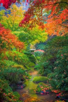 When purchasing trees and shrubs remember to plan for the colors your landscape will change into when fall arrives.  It can become magical to watch.