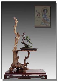 Beautiful Bonsai on equally as beautiful deadwood stand.