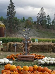 2009 - McMillan Farms all set up for fall fun. Farms Living, Past, Pumpkin, Fun, Outdoor, Outdoors, Past Tense, Pumpkins, Outdoor Games