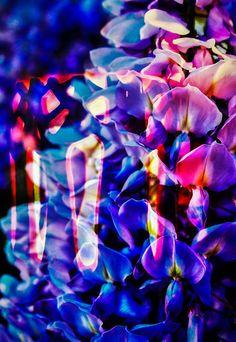 'Blühende Fantasie 2' von Walter Zettl bei artflakes.com als Poster oder Kunstdruck $22.17