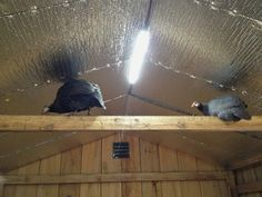Murano Chicken Farm: Insulating the coop for the guineas Raising Backyard Chickens, Keeping Chickens, Pet Chickens, Rabbits, Chicken Coop Plans, Building A Chicken Coop, Diy Chicken Coop, Chicken Ideas, Chicken Feeders