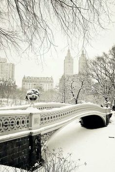 As hectic as this looks, I would still love to see it for real. Central Park in the snow.