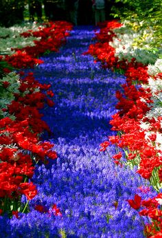 Flower Carpet, Keukenhof, Netherlands. I want to go back!