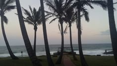See 34 photos from 220 visitors about spacious rooms, scones, and outdoor seating. Salt Rock, Evening Sunset, Beautiful Scenery, Outdoor Seating, Great Places, Palm Trees, Nature, Travel, Palm Plants