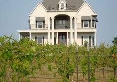 Tara Vineyard and Winery | Texas wine events and Texas Wineries