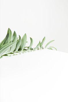 Via Anna Lawska - Green Leaf Art - Minimal - Botany Green Plants, Tropical Plants, Air Plants, Cactus Plants, Indoor Plants, Macaroon Wallpaper, Leaf Photography, Plants Are Friends, Green Nature