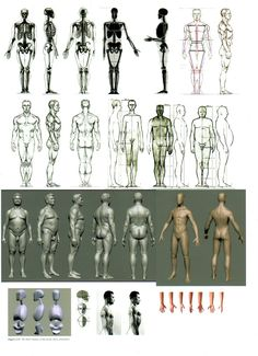 male figure reference sheet