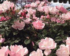 Flowers #areyouami #ayai #flowers