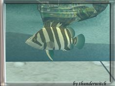 Finscale Tigerfish