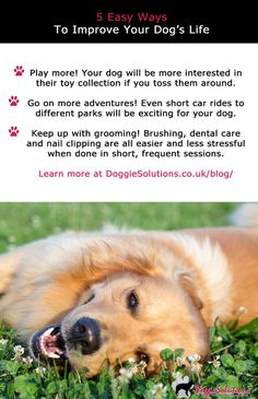 33 Doggie Solutions Blog Ideas Dogs Online Pet Store Your Dog