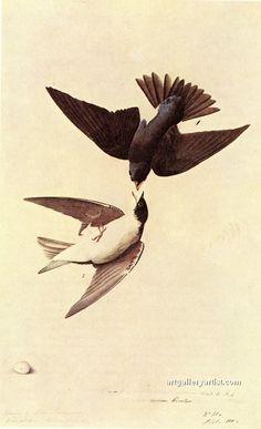 TREE SWALLOW.jpg by John James Audubon