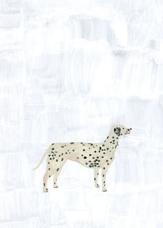 dalmatian - fumi kioke - dogs