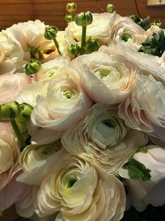 pale pink ranunculus, charming by moody. My Flower, Fresh Flowers, Beautiful Flowers, Prettiest Flowers, Beautiful Things, Colorful Roses, Pale Pink, Peach Blush, Mother Nature