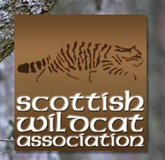 Welcome to the Scottish Wildcat Association, small cat conservation organisation