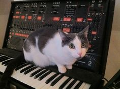 Arp 2600 with kitty