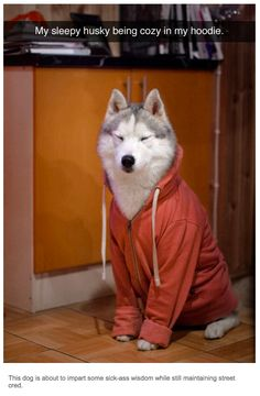 Now that ain't right. Huskys don't wear parkas when they run in the Arctic. 37 Times Tumblr Told The Truth About Dogs
