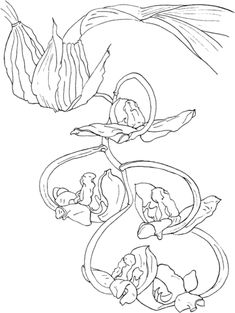 Gongora Orchid - Orquídea Gongora Galeata Var Luteola Dibujo para colorear