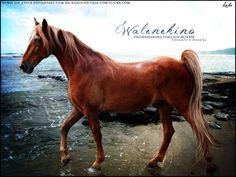 Walenekino by Subaru09.deviantart.com on @DeviantArt