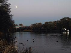 本日の石神井公園。 鴨がふえてます。 月がきれいでした。