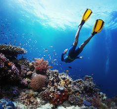 Discover vibrant sea life at these 3 breathtaking #CaboSanLucas #snorkeling spots.