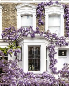 House covered in wisteria in Kensington, London