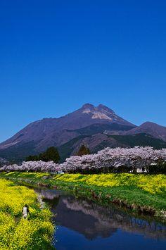 Cherry blossoms in full bloom, Oita, Japan. YuFu-Dake, Yufu-In, Oita: very popular hot spa resort in Kyushu Island. Oita, Beautiful World, Beautiful Places, Kyushu, Sakura, Visit Japan, Papa Francisco, Japan Travel, Japan Trip