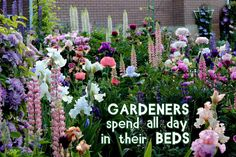 Gardeners spend all day in their beds.