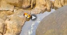 A Woman Films A Crab And Then Something Unexpected Happens. I'm Screaming!