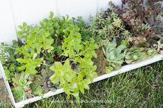 Did you know succulents need fertilizer? Find out how to fertilize your succulents in this post! Choosing a fertilizer specifically for succulents is extremely important. This post covers the best options for succulent fertilizer. Succulent Fertilizer, Succulent Care, Succulents Garden, Lush, Flowers, Plants, Outdoor, Gardening, Banana