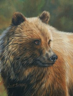 Grizzly bear painting by David Stribbling