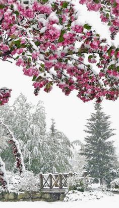 Snow in June!!!  Calgary, Canada
