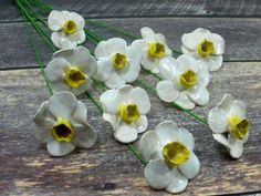 White and yellow Daffodil ceramic flowers White and yellow Daffodil ceramic flowers – Ceramics By Orly Ceramic Decor, Ceramic Pottery, Pottery Art, Ceramic Art, Daffodils, Daffodil Flowers, Sculptures Céramiques, Ceramic Flower Pots, Clay Flowers