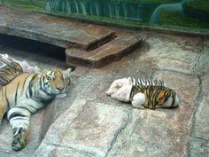 animal friendships045