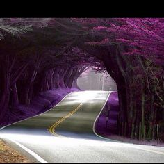 This is the purple pathway  to 'heaven'.  Loveeeee it!