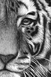 - Pencil Drawings by Lisandro Peña Today was fun, I saw some pictures that were amazing! So I posted them hoping that you'll have creative ideas that sparkle! This one I was amazed with! The shading, the brush work! I hope you enjoy today's Amazing Drawings, Cool Drawings, Amazing Art, Drawings Of Tigers, Realistic Animal Drawings, Pencil Drawings Of Animals, Drawn Art, Drawing Techniques, Pencil Art