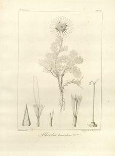 v. 4 pt. 3 - Voyage dans l'Inde / - Biodiversity Heritage Library