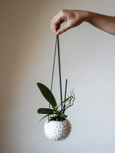Ceramic hanging planter/ air planter/ succulent by OlisCupboard
