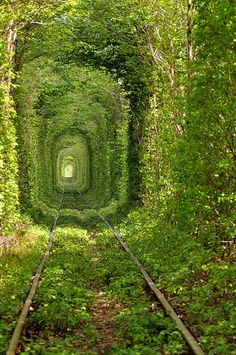 green grass of tunnel