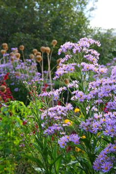 Plant these perennial flowers at the back of the bed and give it room to grow. http://gardenseason.com/perennial-flower-garden/