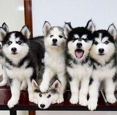 https://www.facebook.com/Worlds.Cute.Pet/photos/a.910915238944500.1073741828.427141163988579/1139086666127355/?type=3
