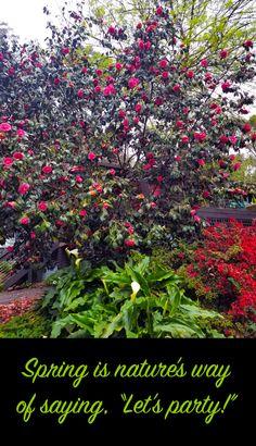 Uplifting spring garden photos, 2020 | Ferny Hill Retreat Holiday Apartments, New Growth, Garden Photos, Spring Has Sprung, Romantic Couples, Spring Garden, Emerald, Bloom, Nature