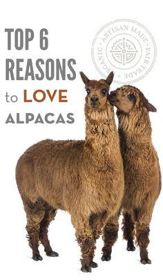 7 best top 6 reasons to love alpaca images fair trade  stock y vectores sobre head sideways