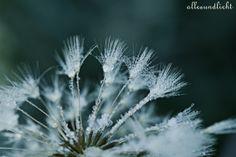 Frosted Dandelion von AllesUndLicht auf DaWanda.com
