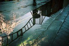Shadows & reflections by Knautia