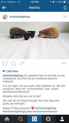 amelia hedgehog is david