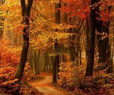 Autumn Path, The Netherlands