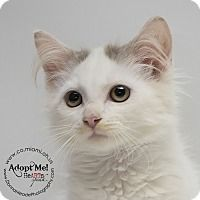 Adopt A Pet :: Simon - Troy, OH