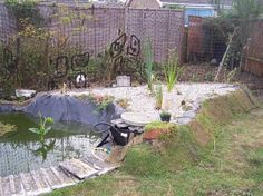 Freshly planted reedbed