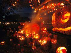 pumpkins... pumpkins everywhere